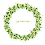Postcard, frame border (wreath) with green camomiles painted in watercolor on a white background Royalty Free Stock Photo