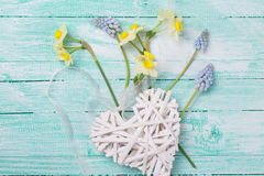 Postcard with fresh flowers daffodils, muscaries and decorative Stock Photography