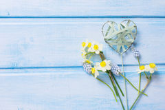 Postcard with fresh flowers daffodils, muscaries and decorative Stock Image