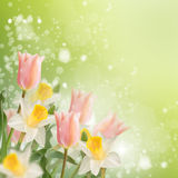 Postcard with fresh flowers daffodils and tulips  and empty  pla Royalty Free Stock Photos