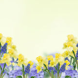 Postcard with fresh flowers  and empty  place for your text Stock Image