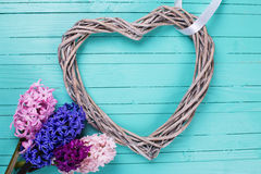 Postcard with fresh flowers hyacinths  and decorative heart Stock Images