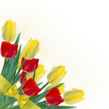 Postcard with fresh flowers tulips  and empty  place for your te Stock Photos
