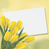 Postcard with fresh flowers tulips  and empty  place for your te Stock Image