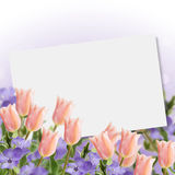 Postcard with fresh flowers tulips Royalty Free Stock Photos