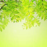 Postcard with fresh green foliage and place for your text Royalty Free Stock Photo