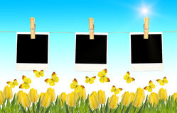 Postcard with fresh tulips and grass. Blank photo frames on clot Stock Image