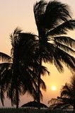 Postcard from Gambia. Silhouette palm trees in Gambia with a sunrise in the background stock photos
