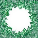 Postcard from green branches. Frame of fern. For invitations, greeting cards, banners and your design Stock Images