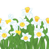 Postcard of green grass with blue and white narcissus flowers isolated on white. Vector illustration Stock Photos