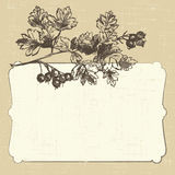 Postcard with hawthorn Royalty Free Stock Photo