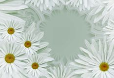 Postcard for the holiday. Floral background with white daisies on a gray background.  Place for text. Flower composition. Nature Royalty Free Stock Photos