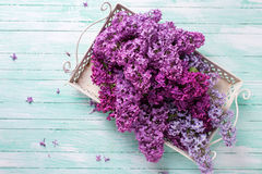 Postcard with  lilac flowers Royalty Free Stock Photos