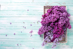 Postcard with  lilac flowers Royalty Free Stock Image