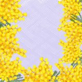 Postcard with mimosas on a light background. Mimosa on the postcard Stock Image