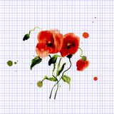 Postcard painted red poppy Stock Photo