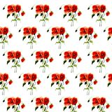 Postcard painted red poppy Stock Photography