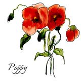 Postcard painted red poppy Royalty Free Stock Photos