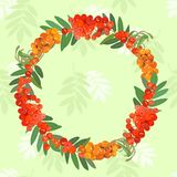 Postcard pattern with sea-buckthorn and mountain ash. Vector illustration. Vector pattern with a wreath made from clusters of bright ashberry, sea buckthorn and Royalty Free Stock Photo