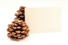 Postcard and pine cone Royalty Free Stock Photos