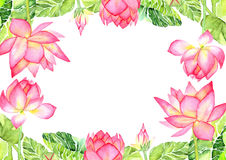 Postcard Pink Lotus Flower Watercolor Illustration. Hand painted watercolor illustration for postcard, on white background Royalty Free Stock Image