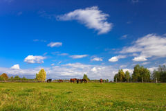 Postcard from Poland. Beauty colours in nature, summer time Stock Photography