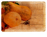 Postcard with pumpkin Stock Images