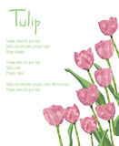 Postcard with red tulips. Polygonal style bouquet of flowers Royalty Free Stock Images