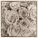 Postcard roses retro style Royalty Free Stock Image