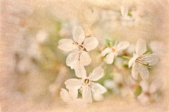 Postcard of spring bloom stock image