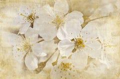 Postcard of spring bloom Stock Photo