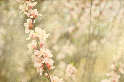 Postcard of spring bloom Royalty Free Stock Photography