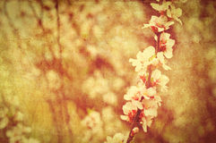 Postcard of spring bloom Royalty Free Stock Image