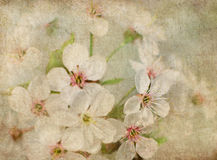 Postcard of spring bloom Royalty Free Stock Images