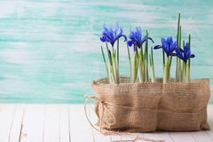 Postcard with spring flowers stock photography