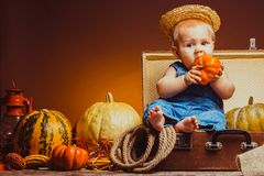 Postcard to the day of Thanksgiving, cute baby royalty free stock photos