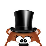 Postcard to Groundhog Day.Marmot on a white background Royalty Free Stock Image