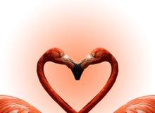 Postcard Valentine's Day Stock Photography