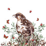 Postcard Watercolor hand drawing quail and plants. Illustration Royalty Free Stock Photo