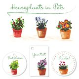 Postcards with watercolor homeplants in pots. Hand drawn illustration. Royalty Free Stock Photo