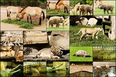 Free Postcards Zoo Royalty Free Stock Photography - 46588577
