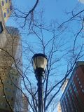 Poste de luz com árvores e céu do inverno imagem de stock