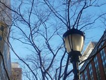 Poste de luz com árvores e céu do inverno imagens de stock