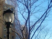 Poste de luz com árvores e céu do inverno fotos de stock