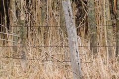 Poste de madera de la cerca delante del bosque fotografía de archivo
