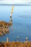 Poste de muestra en pantano inundado Fotografía de archivo libre de regalías