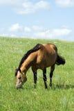 Poste del caballo cuarto del ante Fotos de archivo libres de regalías