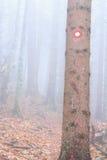 Poste indicador en un árbol Fotografía de archivo