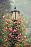 Poste y rosas de la lámpara Fotografía de archivo