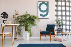 Poster above blue wooden armchair in flat interior with plant next to table and lamp. Real photo royalty free stock photo